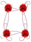 Frame with red roses on a white background. Stock Photos