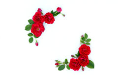 Frame of red roses on a white background with space for text. Royalty Free Stock Images