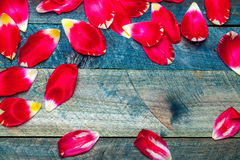 Frame from red tulip petals Stock Image