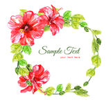 Frame from red watercolor Hibiscus flowers. Illustration isolated on white background. Colorful floral collection with leaves and flowers, hand drawn. Spring Royalty Free Stock Photo