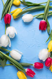 Frame from red, yellow and white tulips flowers  on  blue textur. Ed background. Selective focus. Place for text. Flat lay Stock Photography