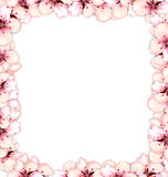 Frame restangle blossoming sakura or cherry red flowers Stock Image