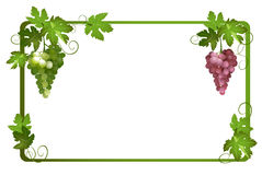 Frame with ripe grapes - eps Royalty Free Stock Photography
