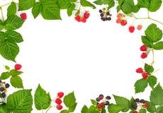 Frame of ripe raspberries and blackberries  on white. Background Stock Photo