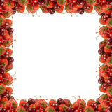 Frame of ripe red berries Royalty Free Stock Photography