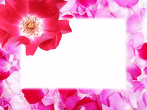 Frame from rose petals Royalty Free Stock Images