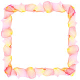 Frame from rose petals. Rose petals frame on white background Stock Photo