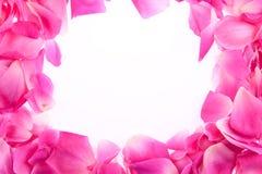 Frame of rose petals. Frame of pink rose petals stock image