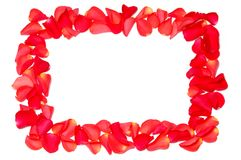 Frame from rose petals. On white background stock photo