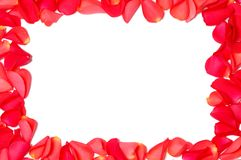 Frame from rose petals. On white background royalty free stock image