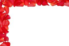 Frame from rose petals Royalty Free Stock Image