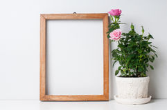 Frame and rose. Vintage blank wooden frame and rose in a pot on a white wall Stock Image