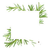 Frame with rosemary Stock Images