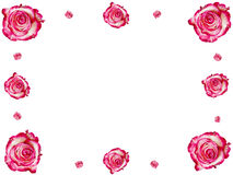 Frame from roses. Creative frame made from roses. Abstract background stock illustration