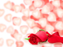 Frame  with a roses and bokeh shape of hearts Royalty Free Stock Image