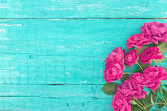 Frame of roses on turquoise rustic wooden background. Spring flo Royalty Free Stock Image