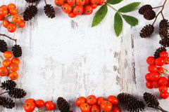 Frame of rowan with leaves and alder cone with copy space for text Royalty Free Stock Photos