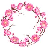 Frame with sakura or cherry blossom. Floral japanese ornament of blooming flowers.  Stock Image