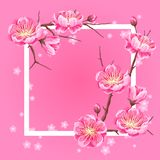 Frame with sakura or cherry blossom. Floral japanese ornament of blooming flowers.  Royalty Free Stock Photography