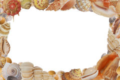 Frame from sea shell Stock Photography