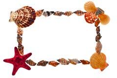 Frame of sea shells. Stock Image