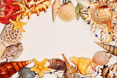 Frame of sea shells on clear background royalty free stock photo