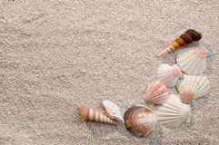 Frame of sea shells on sand Stock Photo