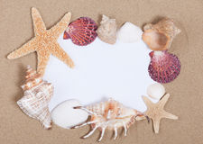 Frame from sea shells Stock Photography