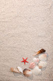 Frame of sea shells and starfish on sand. Warm light Royalty Free Stock Photos