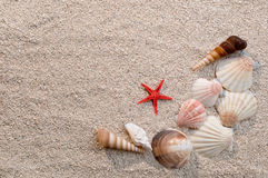 Frame of sea shells and starfish on sand Stock Photos