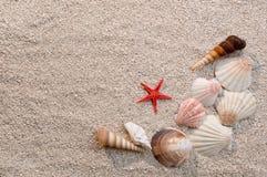 Frame of sea shells and starfish on sand stock photos