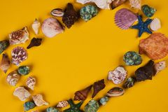 Frame of sea shells of various kinds Stock Photography