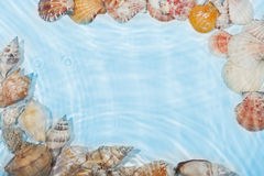 The frame of sea shells in the water Royalty Free Stock Image