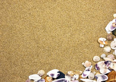 Frame with seashells. And sand Royalty Free Stock Photography