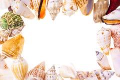 Frame of seashells Royalty Free Stock Photos