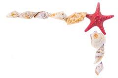 Frame of seashells Stock Photography