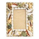 Frame of seashells Royalty Free Stock Images