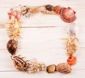 Frame of seashells stock photo