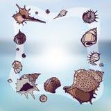 Frame of seashells. Stock Photos