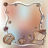 Frame of seashells Royalty Free Stock Photos