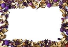 Frame seco das flores fotografia de stock royalty free