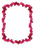 Frame selvagem das rosas imagem de stock