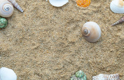 Frame of shellfish on the sand background. stock photos