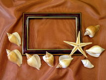 Frame and shells Stock Photography