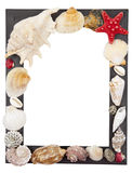 Frame with shells Stock Photos