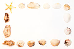 Frame of shells isolated on a white background Royalty Free Stock Photos