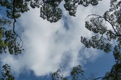Frame with sky and leaves. Frame with leaves on a background cloudy sky Royalty Free Stock Images