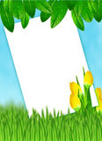 Frame with sky,tulips, green leaves and grass Royalty Free Stock Photo