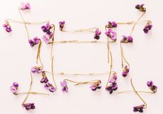 A frame of small forest flowers purple violets on white background, mock up for text, for phrases, for lettering, for congratulati. Onst. Flat lay, top view Royalty Free Stock Images