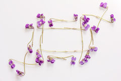 A frame of small forest flowers purple violets on white background with space for text. Royalty Free Stock Images